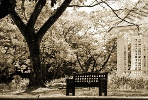 image from http://www.pentaxforums.com/gallery/photo-bench-park-22153/